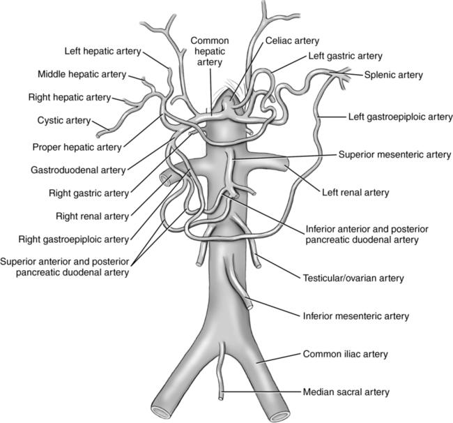 Abdominal vasculature | Obgyn Key