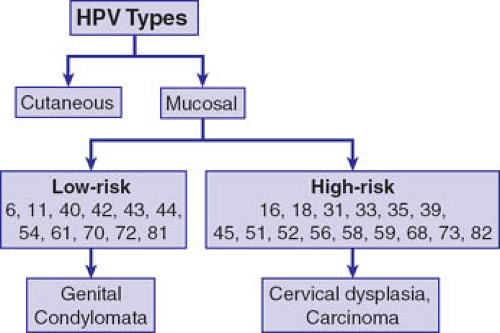 Natural History Of Human Papillomavirus And Anogenital Cancers