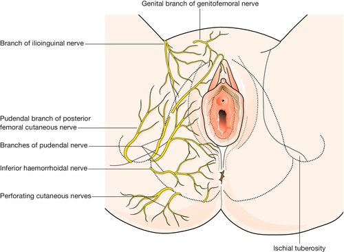 Nerve pain in the vagina