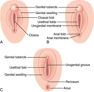 Non Sexual Vagina Photos