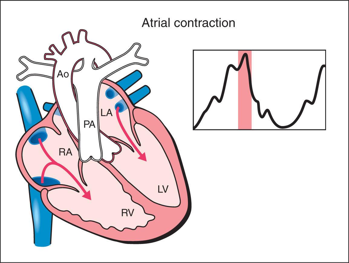 Fetal Cardiac Function Obgyn Key