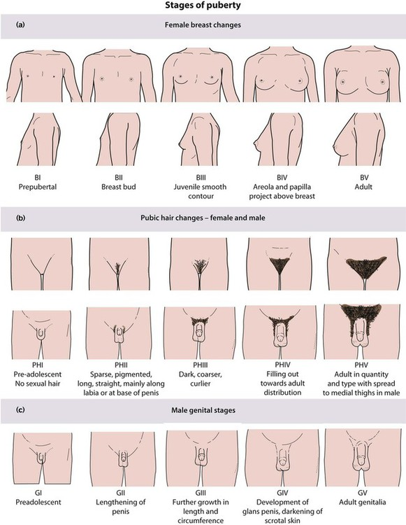 Breast development chart