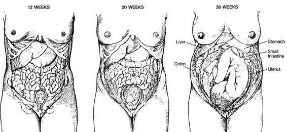 Diagnostic and Operative Laparoscopy   Obgyn Key